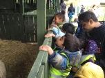 A Nursery trip to Gorgie Farm