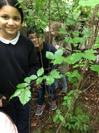 Forest Schools (2)