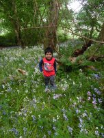 Forest Schools (30)