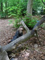 Forest Schools (31)