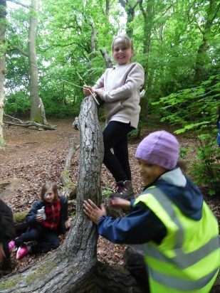 Forest Schools (32)