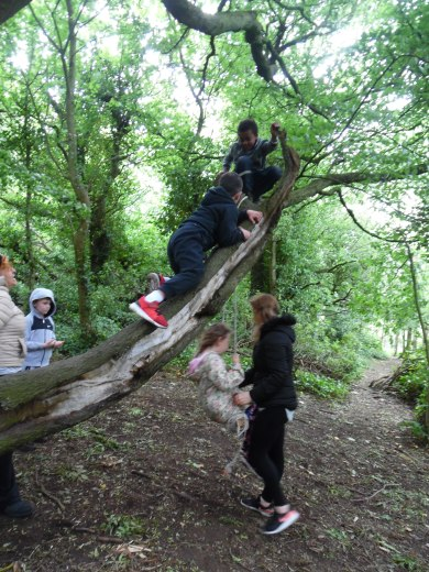 Forest Schools (8)